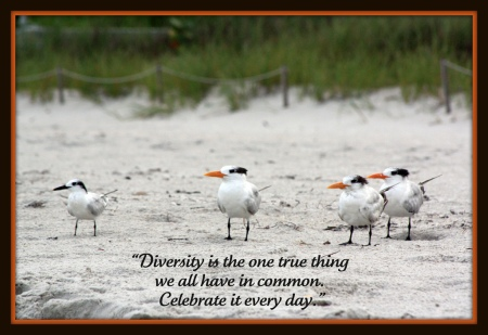 Diversity (Credits: librariesrock / FlickR)