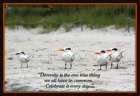 Diversity (Credits: librariesrock / FlickR)